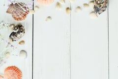 Marco del vintage con las cáscaras del mar en el fondo de madera de la sobremesa Fotos de archivo