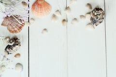 Marco del vintage con las cáscaras del mar en el fondo de madera de la sobremesa Imagenes de archivo