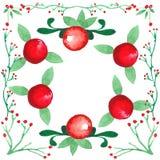 Marco dibujado mano de la acuarela Ranberries del ¡de Ð Fotografía de archivo libre de regalías