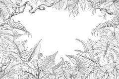 Marco dibujado mano de las plantas tropicales stock de ilustración