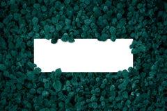 Marco, en blanco cuadrados para la tarjeta de publicidad o la invitación Imagen de archivo libre de regalías