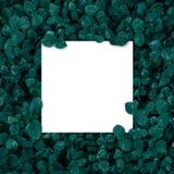 Marco, en blanco cuadrados para la tarjeta de publicidad o la invitación Foto de archivo libre de regalías