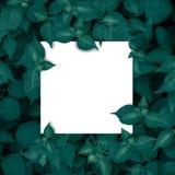 Marco, en blanco cuadrados para la tarjeta de publicidad o la invitación Imágenes de archivo libres de regalías