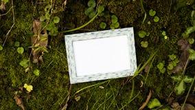 Marco en blanco de la foto sobre musgo verde en el bosque verde Imagen de archivo