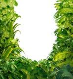 Marco en blanco de las plantas tropicales Fotos de archivo