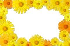 Marco floral Fotos de archivo