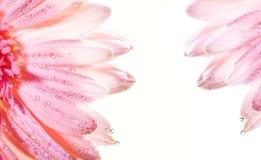 Marco floral abstracto Imagen de archivo libre de regalías