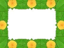 Marco floral con las flores amarillas y la hoja verde Fotografía de archivo