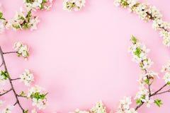 Marco floral con las flores blancas de la primavera aisladas en fondo rosado Endecha plana, visión superior Fondo del tiempo de p imagenes de archivo