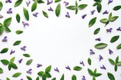 Marco floral con las hojas del verde y las flores púrpuras Fotografía de archivo