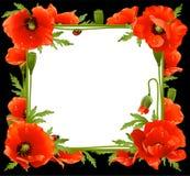 Marco floral de la amapola Foto de archivo libre de regalías