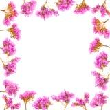 Marco floral hecho de las flores del Limonium o de Statice aisladas en el fondo blanco Visión superior con el espacio de la copia foto de archivo