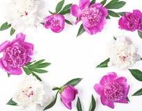 Marco floral hecho de las flores rosadas y blancas y de las hojas de la peonía aisladas en el fondo blanco Endecha plana foto de archivo