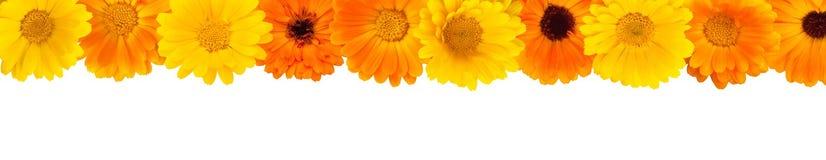 Marco floral hermoso del rectángulo Fotografía de archivo