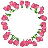 Marco floral redondo Tulipanes rosados rojos con las hojas Ejemplo dibujado mano de la acuarela y de la tinta Aislado en el fondo libre illustration