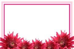 Marco floreciente de la flor Imágenes de archivo libres de regalías