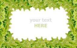 Marco fresco de la ensalada verde Fotos de archivo