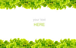 Marco fresco de la ensalada verde Foto de archivo libre de regalías