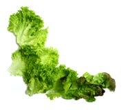 Marco fresco de la ensalada verde Fotografía de archivo
