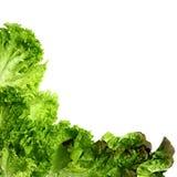 Marco fresco de la ensalada verde Foto de archivo