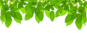 Marco fresco verde de la hoja Fotos de archivo