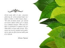 Marco fresco verde de las hojas Imagen de archivo libre de regalías
