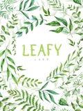Marco herbario del vector de la mezcla Plantas, ramas y hojas pintadas a mano en el fondo blanco Diseño de tarjeta natural Fotos de archivo libres de regalías