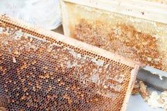 Marco hermoso amarillo del panal con la miel Fotografía de archivo