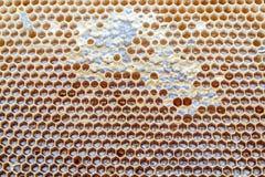 Marco hermoso amarillo del panal con la miel Imagen de archivo libre de regalías
