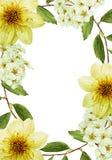 Marco hermoso de la acuarela de la flor de la dalia Imagen de archivo libre de regalías