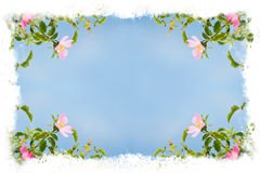 Marco hermoso de la flor Foto de archivo libre de regalías
