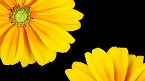 Marco hermoso del girasol Foto de archivo libre de regalías