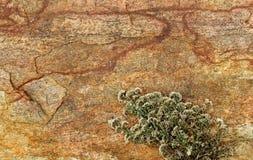 Marco horizontal muy bonito de la roca agrietada con el fondo natural de la textura de la planta verde Imágenes de archivo libres de regalías