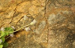 Marco horizontal muy bonito de la roca agrietada con el fondo natural de la textura de la planta verde Fotos de archivo
