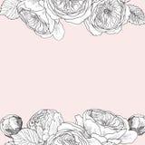 Marco inglés blando de las rosas del jardín Ejemplo dibujado mano botánica del vintage Flores de la primavera alrededor del lugar Fotos de archivo