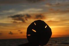 Marco Island Sunset Sand Dollar Imágenes de archivo libres de regalías