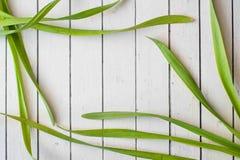 Marco largo fresco de la hierba un fondo de madera rústico, haciendo el copyspace perfecto para su texto Foto de archivo libre de regalías