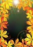 Marco ligero de las hojas de otoño Imagenes de archivo