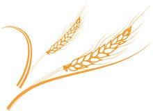 Marco maduro de los oídos del trigo del oro, frontera o elemento de la esquina Fotos de archivo libres de regalías