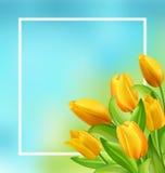 Marco natural con las flores amarillas de los tulipanes Imágenes de archivo libres de regalías