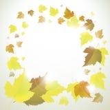 Marco o fondo del otoño con las hojas Imagen de archivo libre de regalías