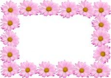 Marco o frontera rosado de la margarita Fotografía de archivo libre de regalías