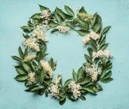 Marco o guirnalda redondo de Elderflowers en fondo azul Foto de archivo