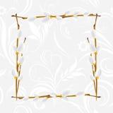 Marco ornamental gris claro con la rama del sauce de gatito Imágenes de archivo libres de regalías
