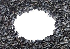 Marco oval hecho de los gérmenes de girasol. Aislado Fotos de archivo libres de regalías