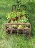 Marco oxidado de la cama usado para el diseño del jardín Fotografía de archivo