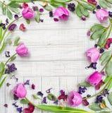 Marco púrpura de las flores de la endecha plana Imagen de archivo libre de regalías