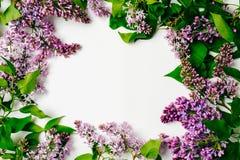 Marco púrpura de las flores de la lila en el fondo blanco Composici?n floral puesta plano, visi?n superior, por encima Fondo de l imágenes de archivo libres de regalías