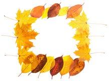 Marco que cae de las hojas de arce del otoño stock de ilustración
