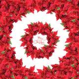 Marco redondo con la guirnalda de las flores de la Navidad Fotos de archivo